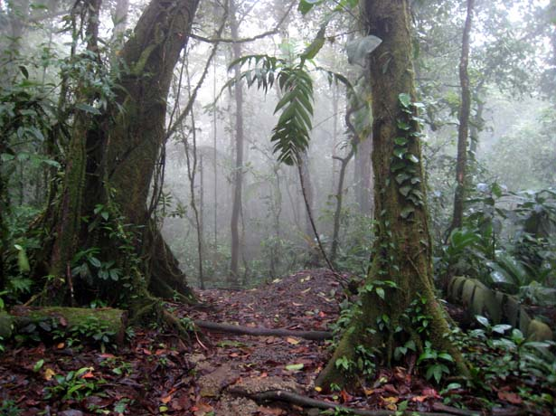 mist in the cloud forest