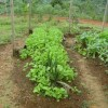 sustainable gardens at OMV using permaculture principles 1