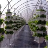 hydroponic green house like those used for sustainable food production